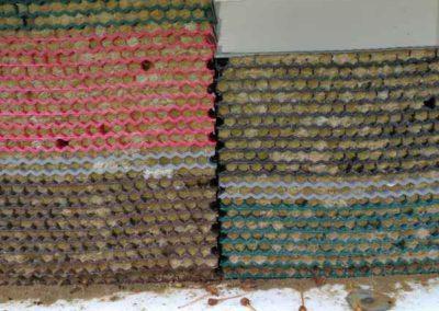 Bienenstock mit Nestern